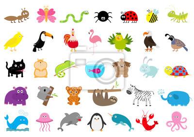Zoo Haustier Wildtier Set. Netter Charakter. Ameise, Schmetterling, Spinne, Marienkäfer, Biene, Jaguar, Tukan, Hund, Flusspferd, Elefant, Faultier, Koala, Flamingo, Katze, Fisch, Zebra. Flaches Design