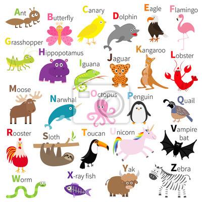 Zoo Tier Alphabet. Netter Karikaturcharakter gesetzt. Weißer Hintergrund. Baby Kinder Bildung. Schmetterling, Delphin, Flamingo, Jaguar, Hummer, Pinguin Faultier Känguru Fledermaus Adler Einhorn Flach