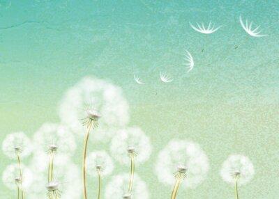 Fototapete Zusammenfassung Hintergrund mit Blume Löwenzahn