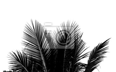 Fototapete Zusammenfassung weiße und schwarze Kokosnuss Blatt auf weißem Hintergrund.