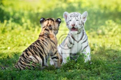 Zwei adorable Tigerjunge sitzen zusammen im Freien