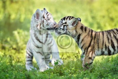 Zwei adorable Tigerjungen, die liebevoll sind