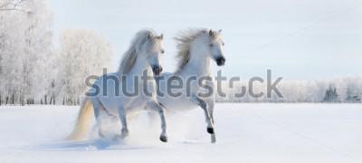 Fototapete Zwei galoppierende weiße Waliser-Ponys auf Schneefeld
