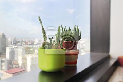 Zwei grüne Kaktus an der Grenze Fenster