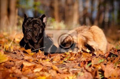 zwei Hunde liegen zusammen