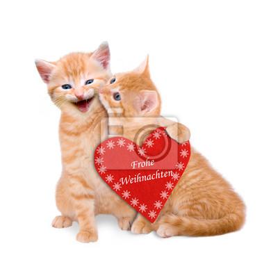 Frohe Weihnachten Katze.Fototapete Zwei Katzen Wünschen Frohe Weihnachten Isoliert