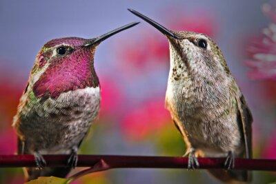 Fototapete Zwei Kolibris stehen nebeneinander auf einem Zweig mit Blumen im Hintergrund.