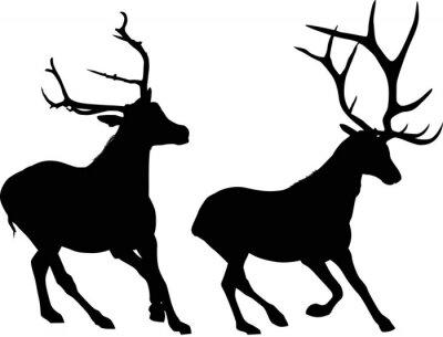 Fototapete Zwei laufende schwarze Hirsche isoliert auf weiß