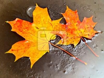zwei orange Ahorn Blätter im Eis