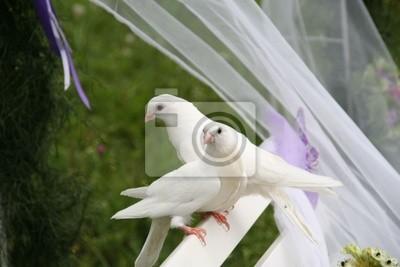 Zwei Weissen Tauben Hochzeit Auf Einer Weissen Bank In Einer