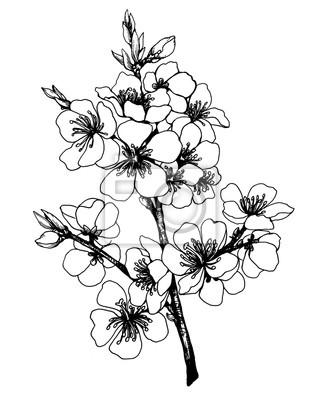 Zweig von sakura mit blumen. apfelbaum blumen. japan kirschblüte ...