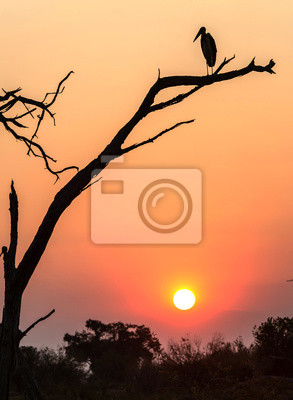 A bird sitting in a tree with a beautiful sunset in Botswana, Africa