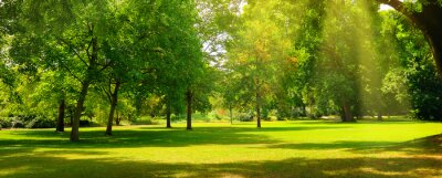 Poster A summer park with extensive lawns. Wide photo.
