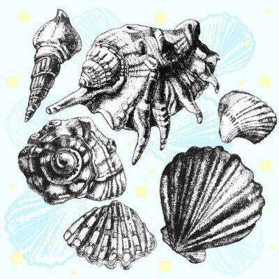 Poster Abbildung mit verschiedenen realistischen Schalen