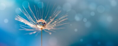 Poster Abstract blurred nature background dandelion seeds parachute. Abstract nature bokeh pattern