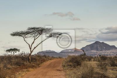 Acacia al Tramonto