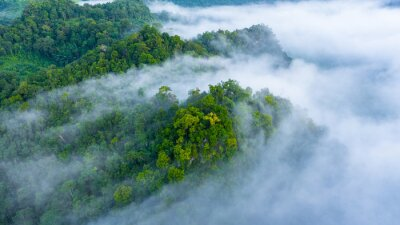 Poster Aerial view of morning mist at tropical rainforest mountain, background of forest and mist, Aerial top view background forest.