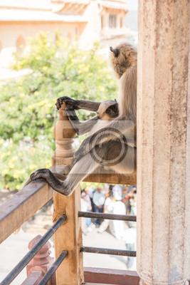 affe sitzt auf dem balkon wandposter poster wachsamkeit primaten ape. Black Bedroom Furniture Sets. Home Design Ideas