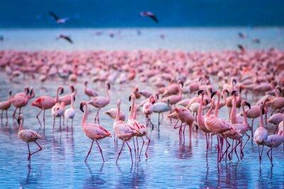 Poster Africa. Kenya. Lake Nakuru. Flamingo. Flock of flamingos. The nature of Kenya. Birds of Africa.