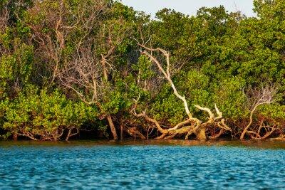 Africahikings in the Mangrove trees