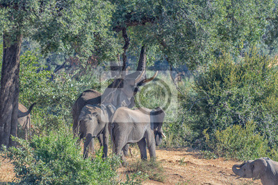 African elephants underneath to a large tree
