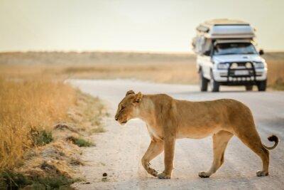 Poster African Safari