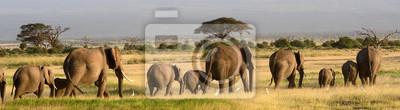 Poster Afrikanische Elefanten, Amboseli Nationalpark, Kenia