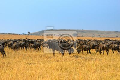 Afrikanische Landschaft mit Antilopen Gnu
