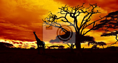 Afrikanische Nacht