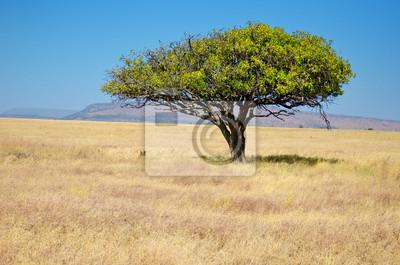 Afrikanische Savanne Grünland Landschaft, Akazie in Savanne in Afrika