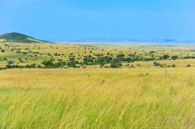 Afrikanische Savanne in Kenia