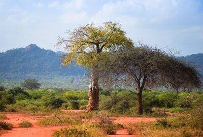 Afrikanische Savanne mit Baobab und Akazienbaum