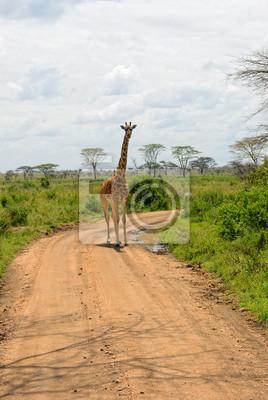 Afrikanische Straße, Tansania