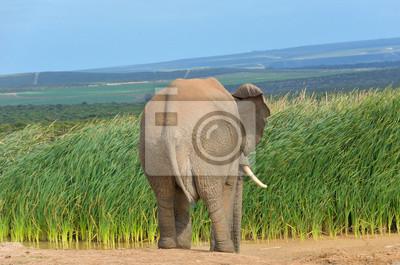 Afrikanische Tiere, Elefanten in der Nähe Wasserloch, Südafrika