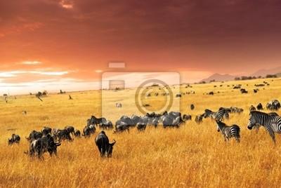 Afrikanische Tierwelt