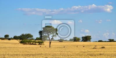 Afrikanische Tierwelt, Kalahari Wüste, Namibia