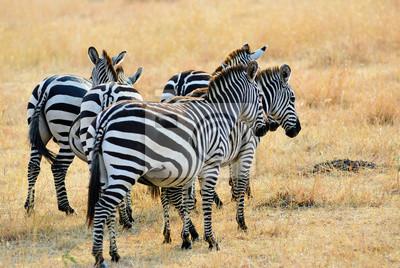 Afrikanische Tierwelt, Kenia