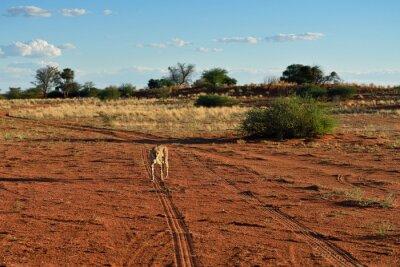 Afrikanische Tierwelt. Namibia
