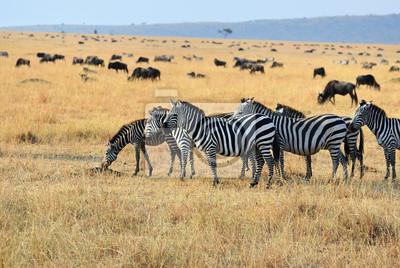 Afrikanische Wildtiere, Kenia