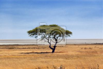 Afrikanischen Natur und Wildlife Reserve, Etosha Pfanne, Namibia