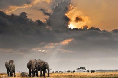 Afrikanischer Sonnenuntergang mit Elefanten