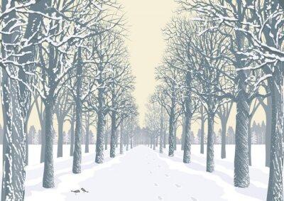 Poster Alley mit schneebedeckten Bäumen Silhouetten in einem Park