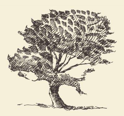 Poster Alte Baum Vintage Illustration Hand gezeichnete Skizze