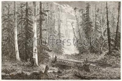 Poster Alte Illustration des russischen Tannenwaldes. Erstellt von Moynet, veröffentlicht am Le Tour du Monde, Paris, 1867