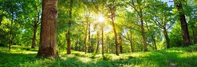 Poster altes Eichenlaub im Morgenlicht mit Sonnenlicht