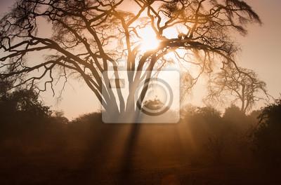 Amazin afrikanischen Sonnenaufgang mit Akazienbaum