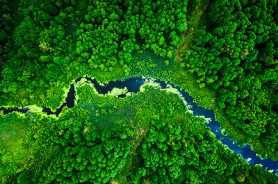 Poster Amazing blooming algae on green river, aerial view