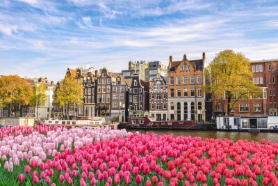 Poster Amsterdam Netherlands, city skyline Dutch house at canal waterfront with spring tulip flower