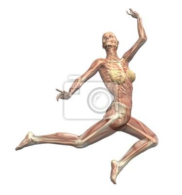 Anatomie in bewegung - eine frau springt 1 wandposter • poster ...
