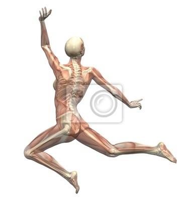 Anatomie in bewegung - frau sprang 2 wandposter • poster Orthopädie ...